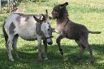 Happy Donkey Hill B&B Llandysul Bed and Breakfasts Llandysul Ceredigion - West Wales
